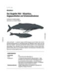 Das Säugetier Wal