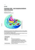 Zelle, Zellteilung und Zelldifferenzierung im Fokus