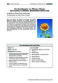 Der Grundbauplan von Pflanzen